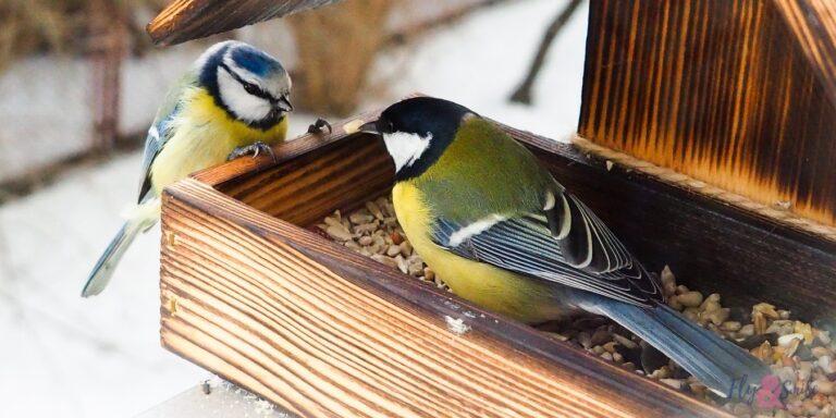 bird feeder guide
