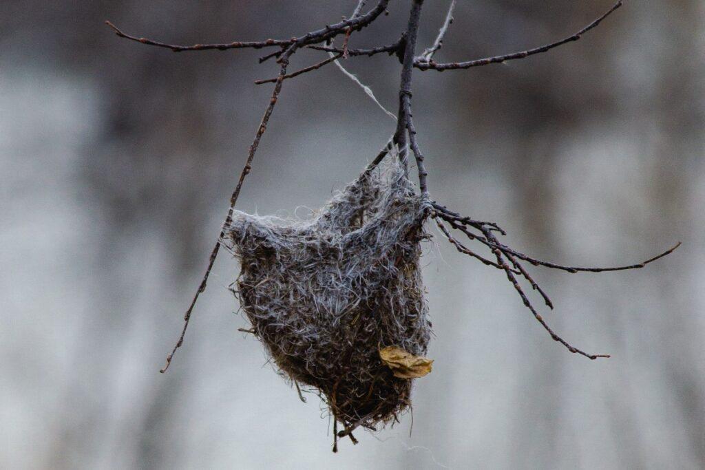 oriole elaborate woven nest