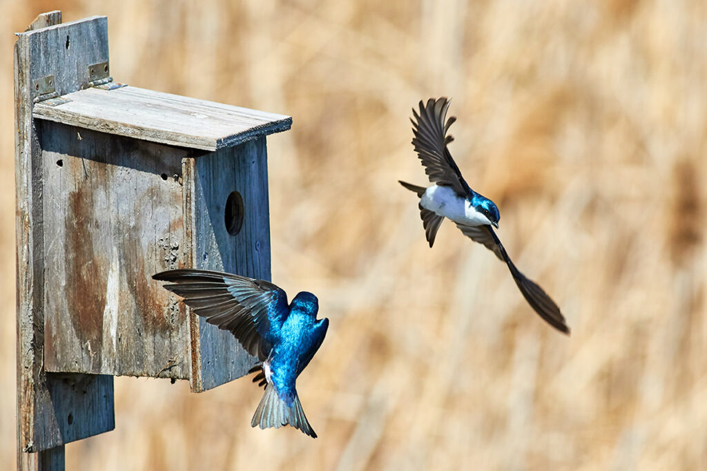 Choose bird boxes with a small opening to prevent access to larger birds